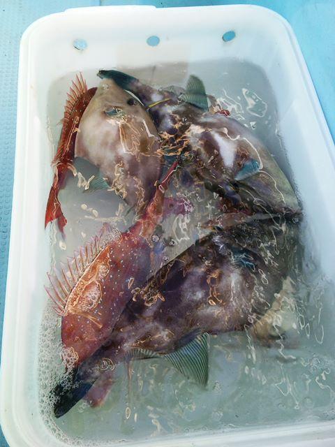 2013年納竿釣行報告